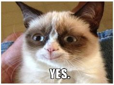 Grumpy Cat Smiling   Your+name+makes+Grumpy+Cat+smile+_a3f057
