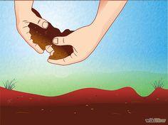 TIPO DE SUELO asegúrese de que su suelo tenga un pH de entre 5.6 y 6.0, suelo ligeramente ácido