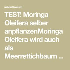 TEST: Moringa Oleifera selber anpflanzenMoringa Oleifera wird auch als Meerrettichbaum oder Wunderbaum bezeichnet. Als Wunderbaum wird er nicht ohne Grund bezeichnet, er ist wirklich ein Wunder der Natur und die Nährstoffreichste Pflanze die es gibt.Er gehört zur Familie der Bennussgewächse (Moringaceae) und kommt ursprünglich aus der Himalaja Region Nordwestindiens. Heute wird Moringa Oleifera in tropischen …