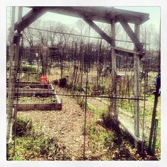 Community Garden | bridget shirvell