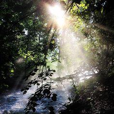 """I believe in God, only I spell it Nature."" ~ Frank Lloyd Wright #earthday #earthday2016 #saveourplanet #naturelover #naturephotography #naturephoto #minnesota #minnehahafalls #minnehahapark"