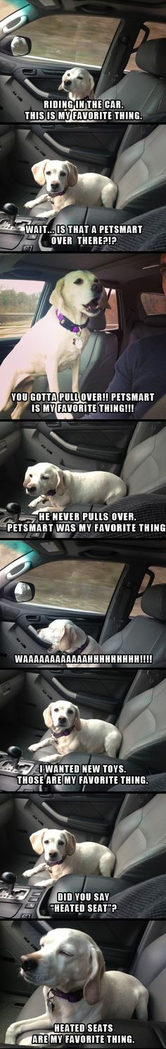 Dog is my co-pilot // funny pictures - funny photos - funny images - funny pics - funny quotes - #lol #humor #funnypictures
