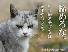 Animals And Pets, Funny Animals, Flyer Design, Dog Cat, To Go, Japan, Humor, Cats, Nature