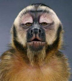Photo & Co - Jill Greenberg - Monkey Unusual Animals, Rare Animals, Animals And Pets, Funny Animals, Funny Animal Faces, Primates, Mammals, Animal 2, Mundo Animal