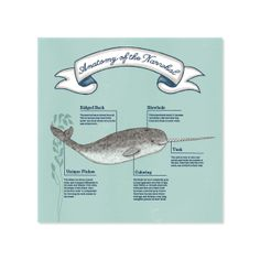 Information graphics about the mysterious narwhal. Whale Facts, The Narwhal, Sea Nursery, Rhapsody In Blue, Bottlenose Dolphin, Facts For Kids, Information Graphics, Research Projects, School