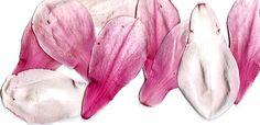 Beautiful petals Magnolia Tattoo, Magnolia Flower, Magnolias, Inspiration, Beautiful, Magnolia Trees, Biblical Inspiration, Inspirational, Inhalation