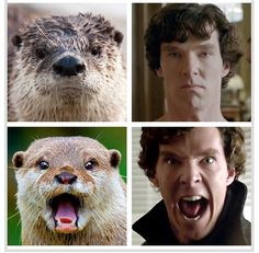 Cumberbatch Vs. Otter...two of my favorite things! LOL #cute
