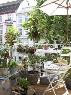 Gemüse und Kräuter auf dem Balkon: Ein kleines Paradies