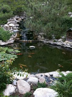 An amazing Koi pond adds to the park-like feel of this tranquil backyard.