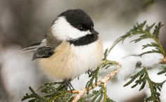How to Help Birds With Your Leftover Holiday Greens