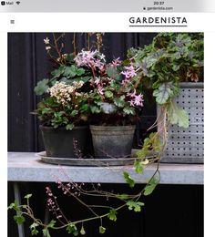 10 Things to Do in the Garden in June (Gardenista: Sourcebook for Outdoor Living) Porches, Bell Gardens, Things To Do, Stuff To Do, Grandmas Garden, Rogers Gardens, Heuchera, Home Vegetable Garden, Tropical Landscaping