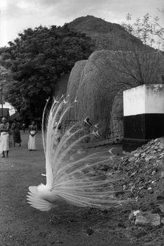 Henri Cartier-Bresson -  Tiruvannamalai, India 1949