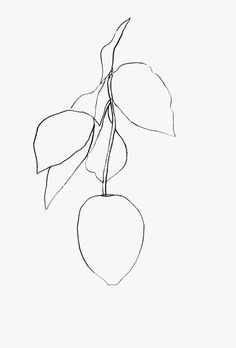65 Trendy Plants Drawing Black And White Ellsworth Kelly Matisse Tattoo, Matisse Drawing, Ellsworth Kelly, Plant Painting, Plant Drawing, Lemon Drawing, Simple Line Drawings, Ink Illustrations, Simple Art