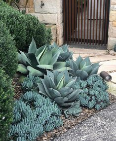Blue grey tones easing our Monday blues. A winning combo of blue chalk sticks, Agave & Westringa. Garden design & Install by… Succulent Landscaping, Modern Landscaping, Front Yard Landscaping, Succulents Garden, Succulent Planters, Succulent Arrangements, Dessert Landscaping, Hanging Planters, Outdoor Plants