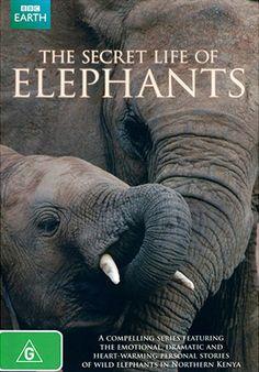 Документальные фильмы BBC - Смотреть онлайн бесплатно в хорошем качестве HD фильмы и сериалы Би-би-си (ББС). Secret Life, The Secret, Bbc, Kenya, Documentaries, Entertaining, Elephants, Animals, Animales