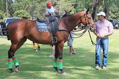 Concejal de Machalí sufre millonario robo de caballos de polo en la Región de O'Higgins Intensa ha sido la búsqueda del concejal de Machalí, Héctor Labbé Valenzuela, quien sufrió el robo de nueve caballos de polo y una yegua chilena, desde su domicilio en esa comuna.  https://www.facebook.com/pages/Foro-Horses/729255127151667