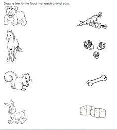 match animals to their food