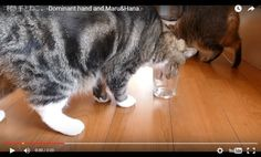 VIDEO: Is Your Cat Right-Pawed Or Left-Pawed? Watch and find out...