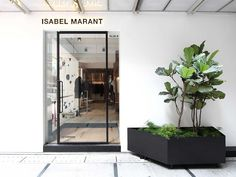 Seven Useful Shade Tolerant Groundcovers For Tough Spots Cigue Isabel Marant Hong Kong Yellowtrace Retail Store Design, Retail Shop, Retail Interior, Interior And Exterior, Isabel Marant, Retail Facade, Sliding Room Dividers, Wood Cladding, Facade Design