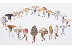 Mushroom circle of life Mushroom Circle, Mushroom Art, Illustrations, Illustration Art, Halloween Illustration, Botanical Illustration, Fairy Ring, Ecole Art, Photocollage