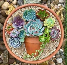 The succulent pot-in-a-pot are absolutely adorable and you can use baby succulents to create your own wonderful designs. That's the nice thing about succulents... they produce little babies all the time and you can easily nip them off and they will quite easily start spreading their own root system.