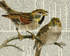 two sweet vintage birds - printed on page from old dictionary