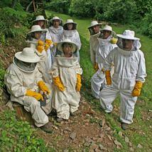 Las abejas y su entorno
