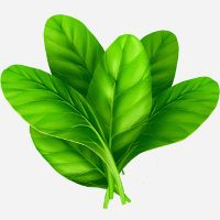 10 Leafy Greens you Might Not Know
