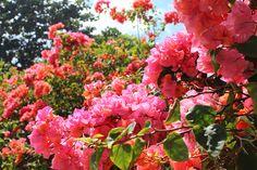 2/13(月)バリ島ウブドのお天気は晴れ。室内温度28.8℃、湿度74%。久しぶりの晴れ!!太陽の光が嬉しい~♪土砂降りの雨続きでしたが、その時期も終わったかな?