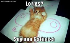 Fotos Chistosas - Soy una Gatiposa   ...........click here to find out more     http://googydog.com