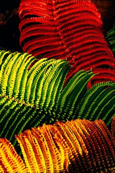 Shop for ferns art from the world's greatest living artists. All ferns artwork ships within 48 hours and includes a money-back guarantee. Choose your favorite ferns designs and purchase them as wall art, home decor, phone cases, tote bags, and more! World Of Color, Color Of Life, Cactus, Rainbow Colors, Color Inspiration, Color Mixing, Flower Power, Plant Leaves, Bloom
