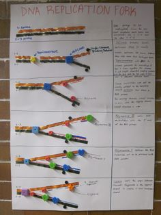 63 best genetics structure of dna replication images on dna replication poster fandeluxe Images