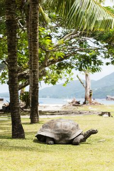 Africa, Mauritius, Réunion & Seychelles image gallery - Lonely Planet