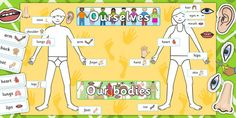 This Ourselves Human Body Display Pack is designed for teachers with little time to make new displays and is perfect for your Ourselves topic. Contains a large human body outline, topic cards and display banners. Number Line Activities, Body Outline, Ourselves Topic, Display Banners, Classroom Organisation, Activity Sheets, Cute Crafts, Our Body, Fine Motor Skills