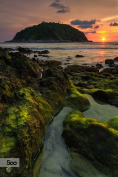 # Green moss and the sunset . . .