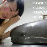 Delfini+piangono+loro+morti?