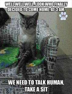 Funny Cat Pics with Captions - 60 the fanniest and the most hilarious pictures! Look other funny and hilarious gifs, videos & pictures of cute cats on site! Funny Animal Memes, Cute Funny Animals, Funny Cute, Cute Cats, Funny Memes, Funniest Memes, Hilarious, Jokes, Animal Captions