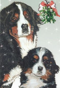 Bernese Mountain Dog Christmas Cards