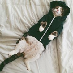 Sleeping Cat in A Hoodie cat autumn adorable fall pets kitten funny animals pet clothes