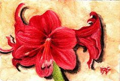 Inktense pencil review - very informative. I'm drooling over the possibility of using these with Zentangles. Amaryllis, 4 x 6 in Derwent Inktense on cold press watercolor paper, by Robert A. Sloan
