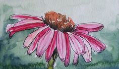 Watercolor painting of a purple coneflower - demonstration