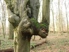 Tree Spirit Tree Forest Nature Spirit Tree Face