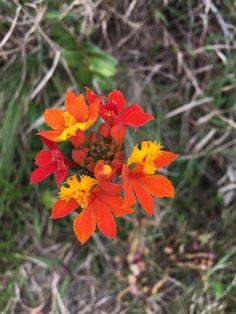 Orquídeas ... primavera