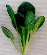 Tatsoi (Brassica rapa var. rosularis)
