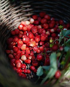 Wild strawberries - my childhood - foraging for them in the summer forest. We call them alpine strawberries here in Australia and we only get them if we plant them in our gardens. Wild Strawberries, Slow Living, Back To Nature, Farm Life, Fruits And Vegetables, Country Life, Land Scape, Food Styling, Food Art