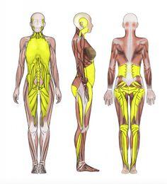 deep-frontal-line_ashleyblackguru-fasciatool-fasciablaster