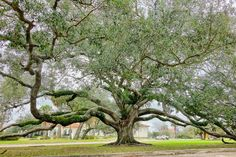 1,300 acres are yours to explore at @nolacitypark, offering some of the world's oldest oak trees, a lauded art museum, an iconic beignet stand, and much more.