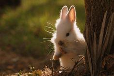 Cute Bunny Photography by Patricia Vazquez-AmO Images-AmO Images