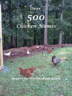 Chicken Names Some folks name their chickens. Some don't. I am one that does. How
