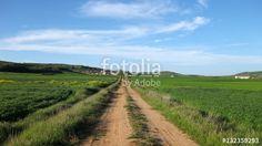Paisajes veraniegos.  Paisajes veraniegos.   #fotolia #sold #photo #Photo #photography #design #photographer #Landscapes #summer #green #fields #roads #colorful